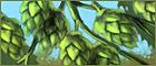 Hops farming.png