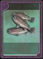 CARDTYPE FISH HAUL.png