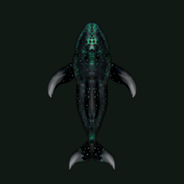 Midnight Whale.png