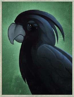 Elegiac Cockatoo