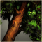 Bronzewood square icon.png