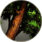 Bronzewood icon.png