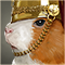 Intrepidcavy square icon.png