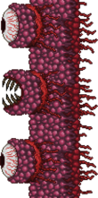 Wall of Flesh.png