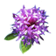 Ironweed.png