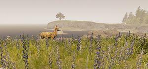 Deer-the-forest-1-0-dirty (2).jpg
