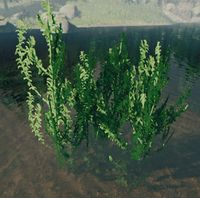 Bush pondweed.jpg