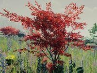 Bush red.jpg