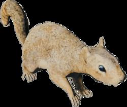 SquirrelFarket.png