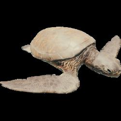 TurtleFarket.png