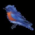 NatureGuideBluebird.png
