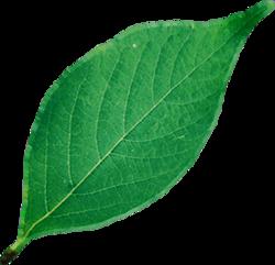 LeafFarket.png