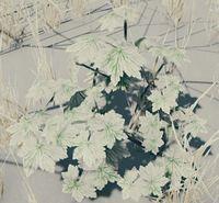 Bush arctic serrated.jpg