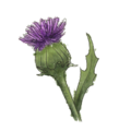 NatureGuideThistle.png