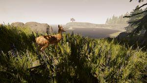 Deer-the-forest-1-0-dirty (3).jpg