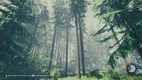 Tall pine.jpg
