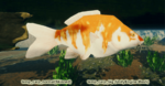 Fish Carp Big.png