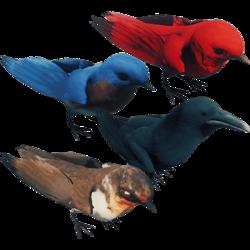 BirdsFarket.png