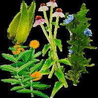 HerbsFarket.png