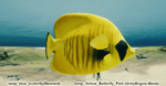 Fish Yellow Butterfly.png
