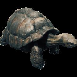Tortoise Farket.png