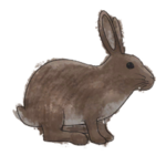 NatureGuideRabbit.png