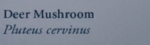 DeerMushroomNaturesGuide.png