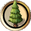 Plant pine tree.png