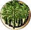 Plant sugarcane.png