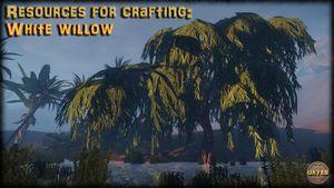 White willow ingame.jpg