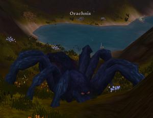 Orachnis.png