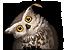 Owl (NPC Icon).png