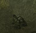 Island Turtle (Enemy).png