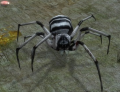 Striped Soldier Spider (Enemy).png