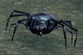 Infected Spider (Enemy).png