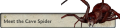 Meet the Cave Spider Tab.png