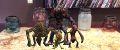 HoloGrid Monster Battle12.jpg