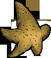 StarfishInteriorWhole.png