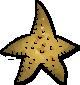 StarfishExterior.png