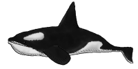 Orca Swim Closed NEW 05.png