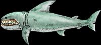 SharkwholeRealistic.png
