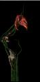 Bestiary Echinops full.png