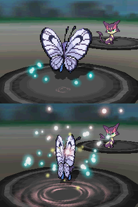 Butterfly Dance.png