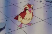 Nurse Joy's Pidgey.jpg