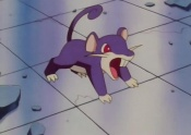 Nurse Joy's Rattata.jpg