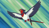 Ash's Swellow