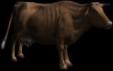 Η Στρώμπερυ, η αγελάδα