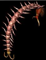 Bestiary Centipede full.png