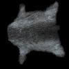 pelt and powder horn
