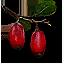 Tw3 berbercane fruit.png